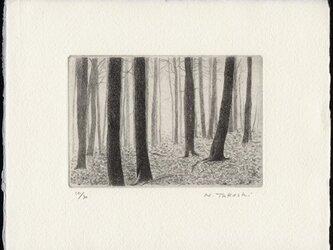 落ち葉の雑木林 / 銅版画 (作品のみ)の画像