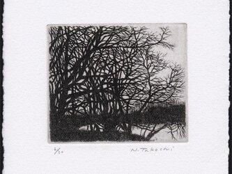 冬の樹 / 銅版画 (作品のみ)の画像