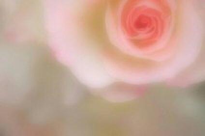 Fantastic Rose