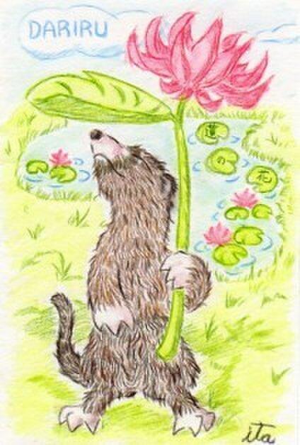 ~蓮の花~