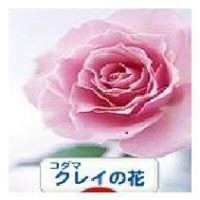 コダマクレイの花