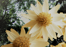 カモミーユ&枝の葉