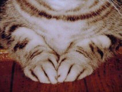 ドーリーの手