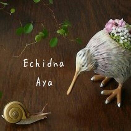 Echidna Aya エキドナ