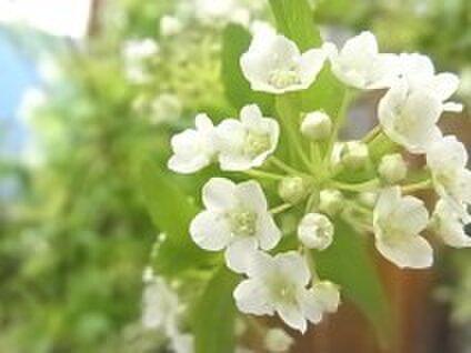 flowermessage