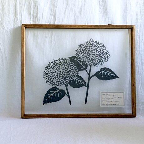 【植物標本シリーズ】アナベルの切り絵フレームの画像