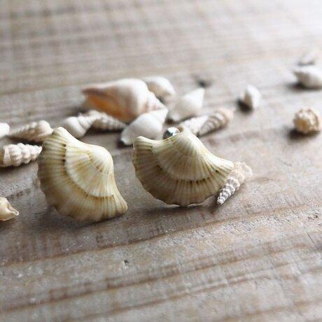 貝殻の耳飾り(イヤリング)の画像
