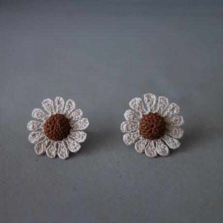 chamomile flower (Chocolat)の画像