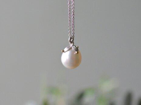 pearlの実 2の画像