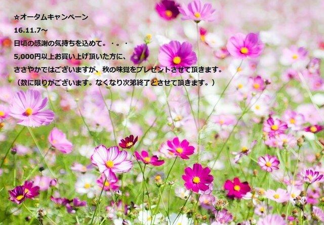 ☆16.11.7〜オータムキャンペーン☆日頃の感謝の気持ちを込めて。・。ささやかではございますが、ちょこっとプレゼント☆の画像1枚目