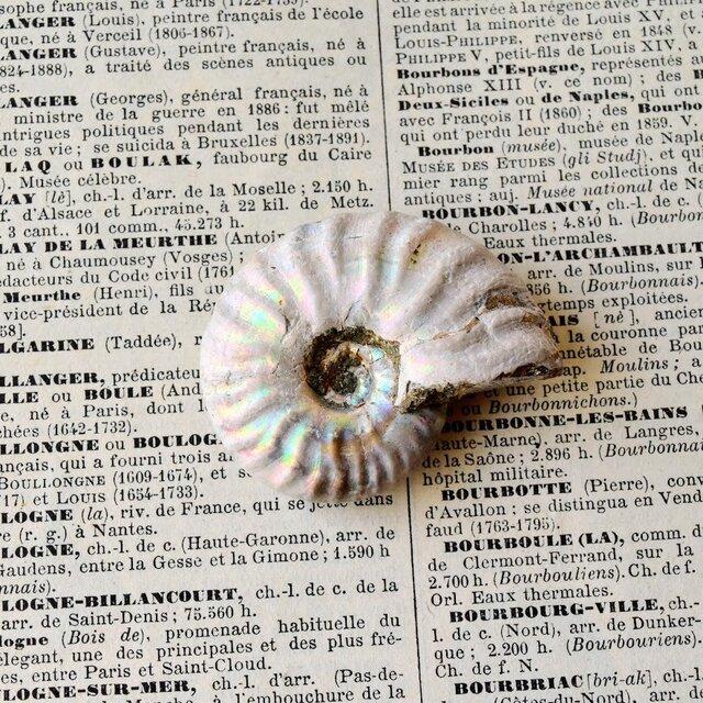 ホワイト・アンモナイト マダガスカル産 18.7g 化石の画像1枚目