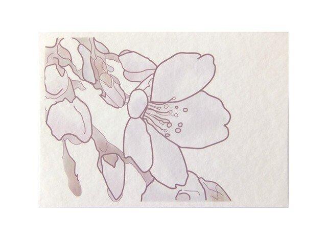 桜 No1 の画像1枚目
