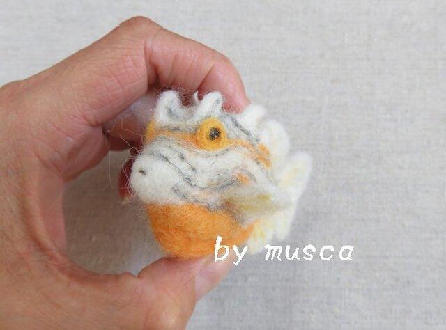 羊毛フグ(オルネイトカウフィッシュ)の画像1枚目