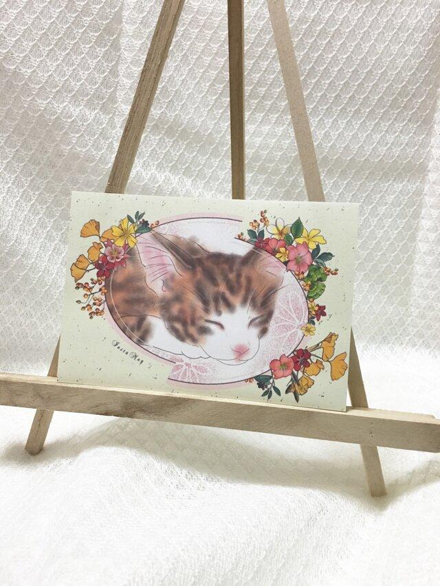 猫ポストカード(組み合わせ自由5枚組)の画像1枚目