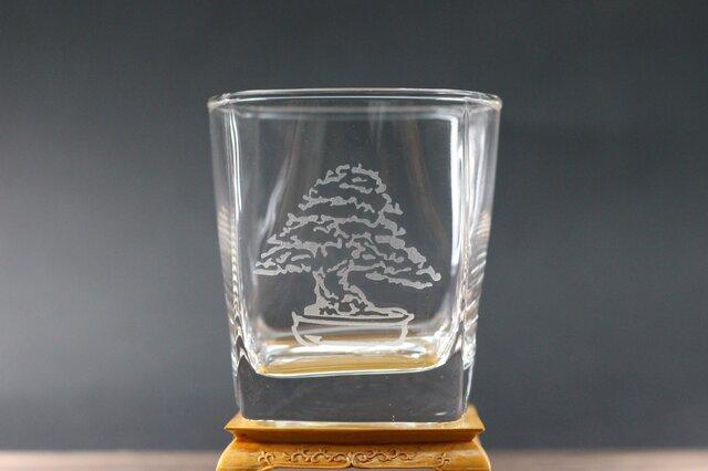 黒松盆栽(模様木) ロックグラスの画像1枚目