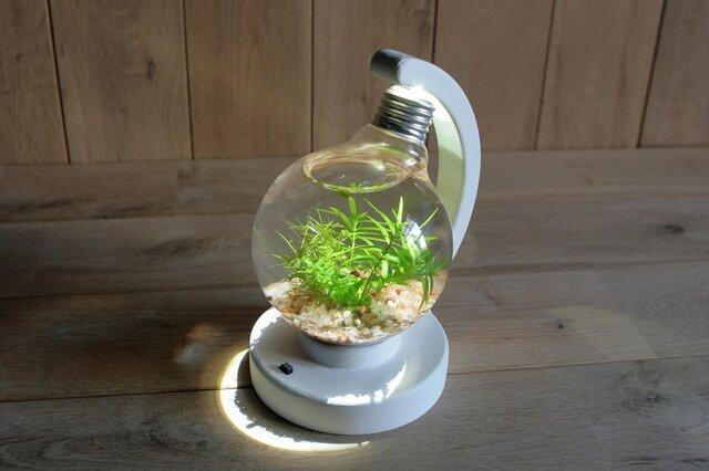 bulb terrarium ball whiteの画像1枚目