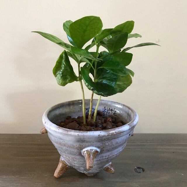 さざえ 陶器 茶小鉢の画像1枚目