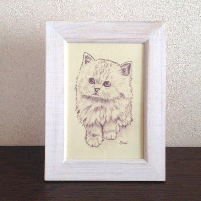 ポストカード チンチラの子猫「なぁに?」同柄4枚の画像1枚目