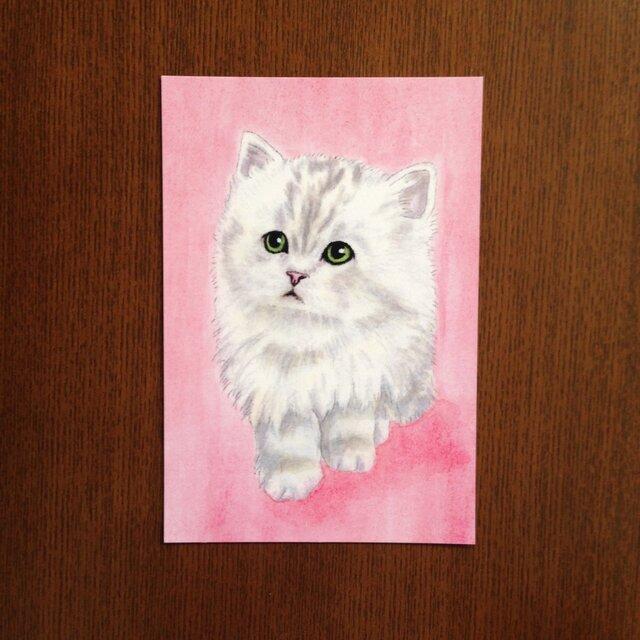 ポストカード チンチラの仔猫「なぁに?」カラー 同柄4枚の画像1枚目