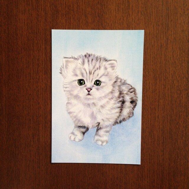 ポストカード チンチラの仔猫 おすわり カラー 同柄4枚の画像1枚目