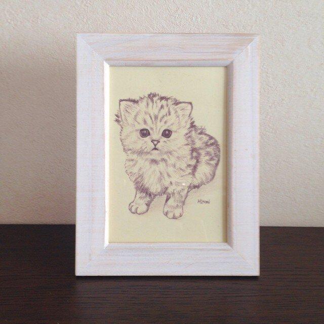 ポストカード チンチラの子猫 おすわり 同柄4枚の画像1枚目