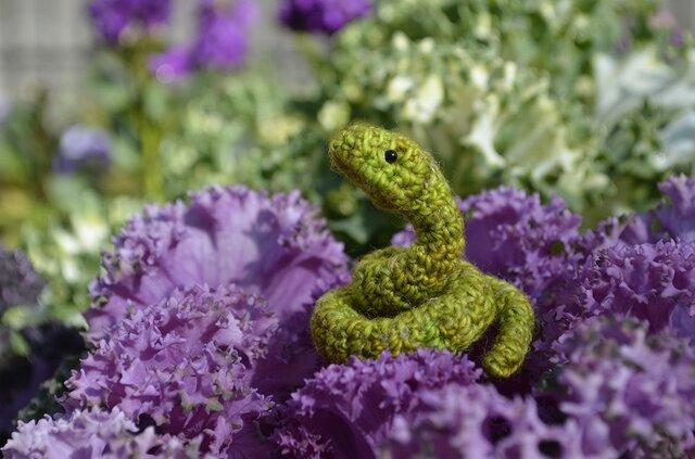 小さなヘビの画像1枚目