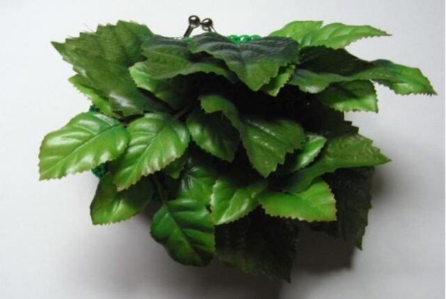 植物ガマグチの画像1枚目
