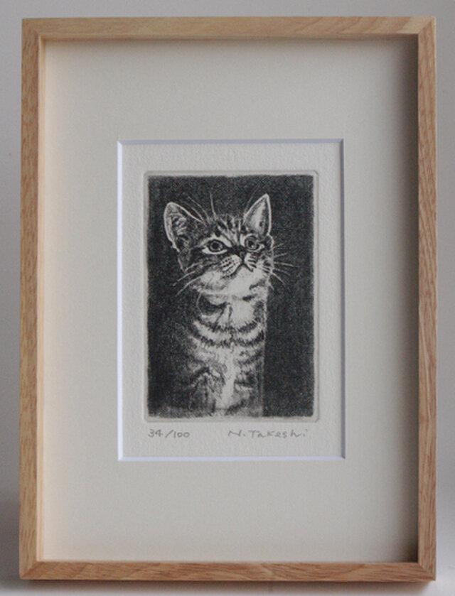 見上げる子猫・A(額あり)の画像1枚目