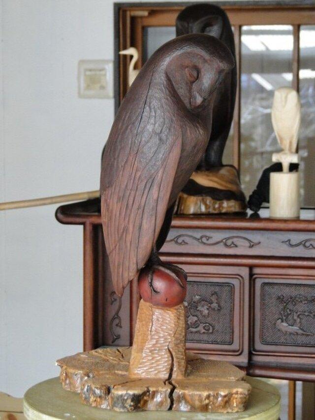 owlの画像1枚目