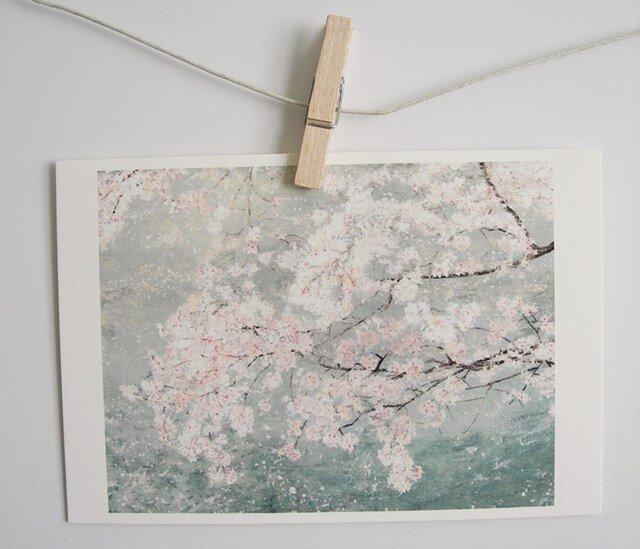 川の上に咲く桜 / postcard 2枚組の画像1枚目