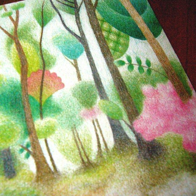 色鉛筆画ポストカード4種の画像1枚目