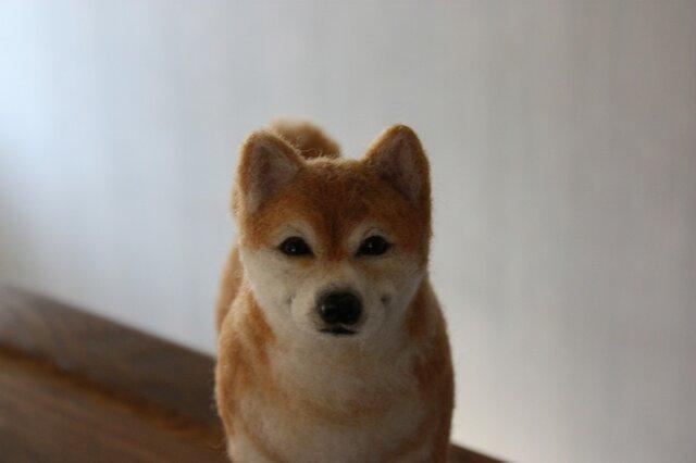 羊毛フェルト リアル柴犬 Shiba Inu ・・・ の画像1枚目