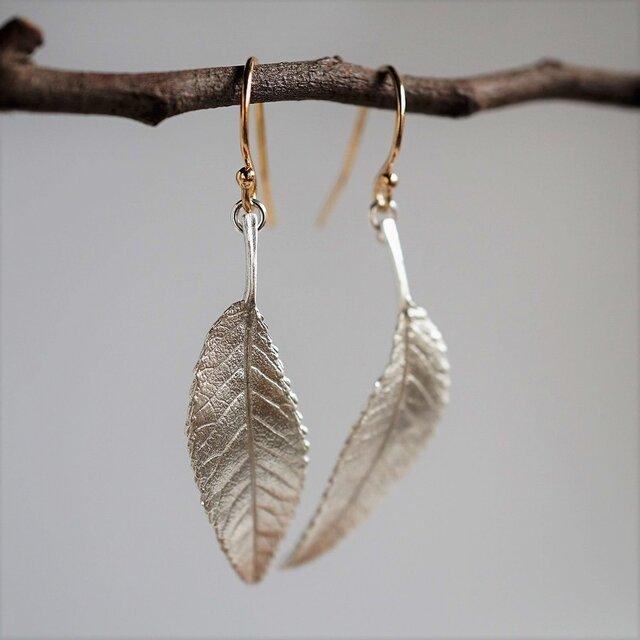 Elm leaf earrings {EP054SV}の画像1枚目