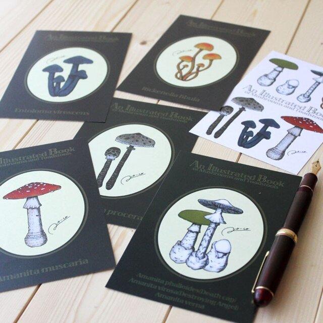 ●キノコ図鑑シリーズ2●アンティークキノコ図鑑のポストカード6種類セットの画像1枚目