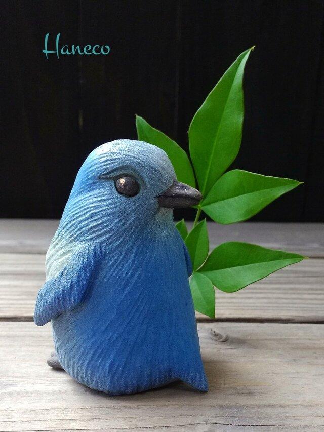 青色見返りペンギンの画像1枚目