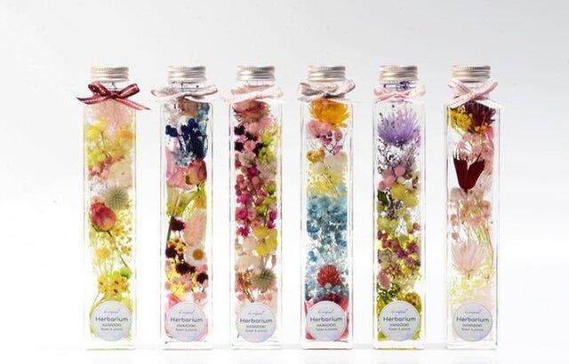 Forest ハーバリウム   HANADOKI.RIUM 「花」の美しい「時」の画像1枚目
