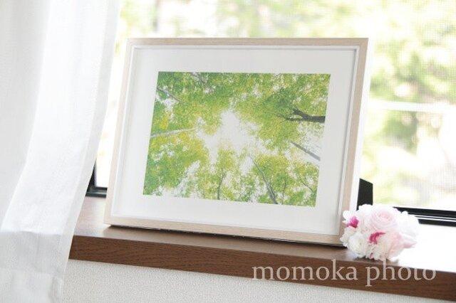 和紙でつづる光の森 癒しの風(額無し 裏打ちあり)の画像1枚目