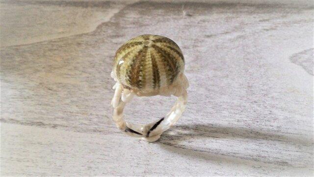 小ウニとサンゴのかけらの指輪の画像1枚目