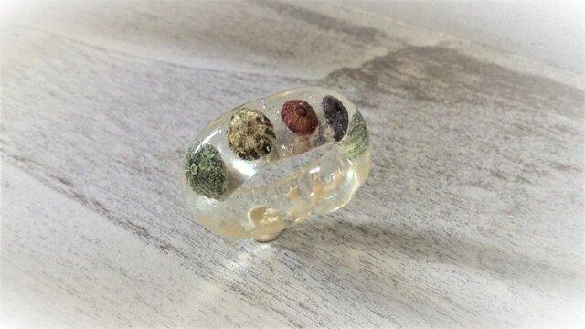 蓄光☆5つの小ウニの標本指輪の画像1枚目