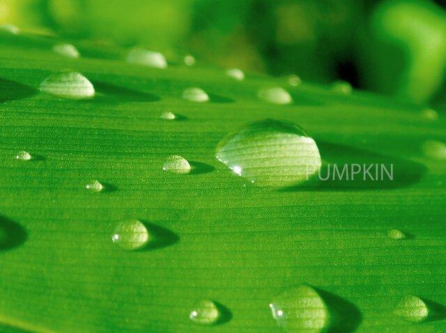 流星-Ⅰ    PH-A4-03     写真 水滴 光 光の粒 雨粒の画像1枚目