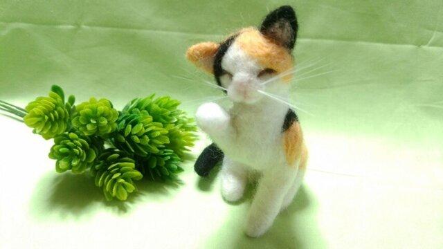 羊毛猫*三毛*毛づくろいの画像1枚目