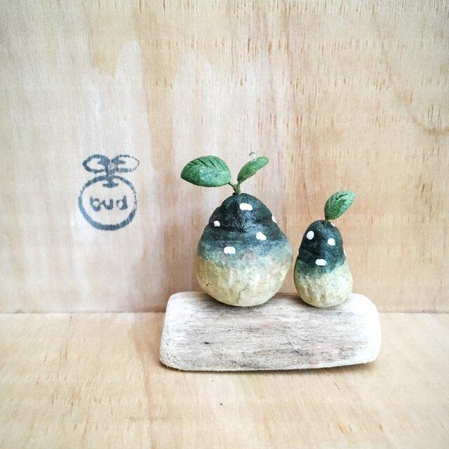 1463.bud 粘土の植物 ドルステニア・フォエチダの画像1枚目