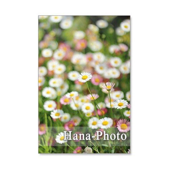 1244) 可愛い庭の花たち      ポストカード5枚組 の画像1枚目