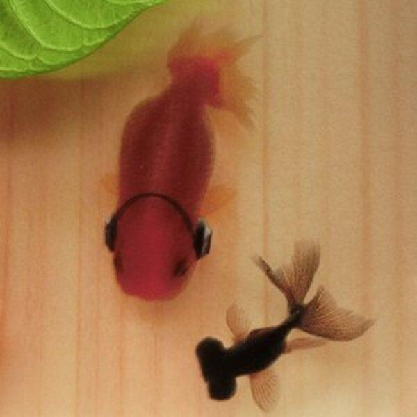 樹脂金魚 金魚アート 「楽」 純日本製 プレゼント 誕生日 結婚 退職 還暦 祝い 男性 女性 クリスマスの画像1枚目