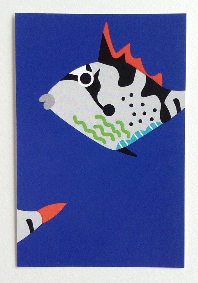 ポストカード4枚セット㉑「きへりもんがら幼魚」の画像1枚目