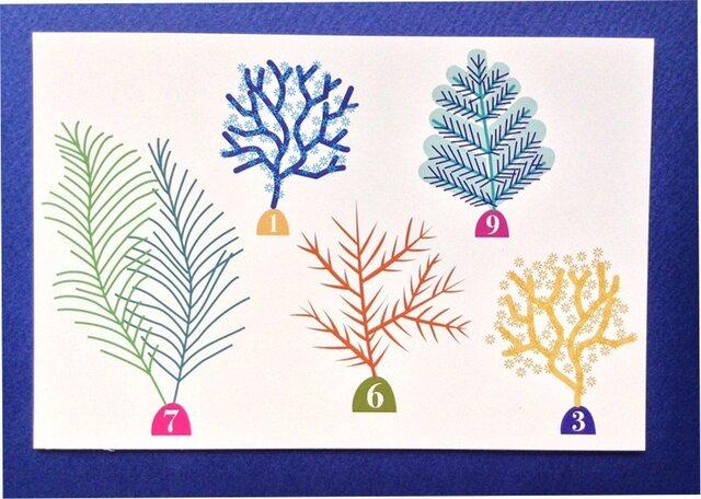 ポストカード4枚セット⑳「海草」の画像1枚目