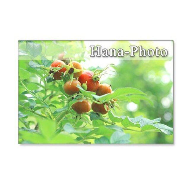 1246)緑のある花の風景    ポストカード5枚組の画像1枚目