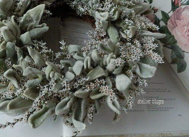 atelierBLUGRA八ヶ岳〜(新作)採れたてラムズイヤーのWreathの画像1枚目
