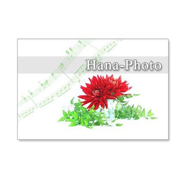 1248)スマイラックスと真っ赤なダリヤ     ポストカード5枚組の画像1枚目