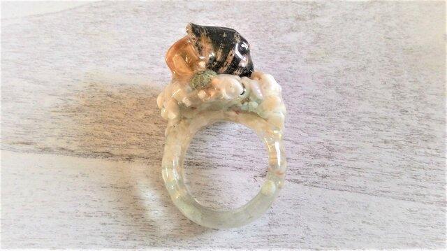 ヤドカリと極小ウニの標本指輪の画像1枚目